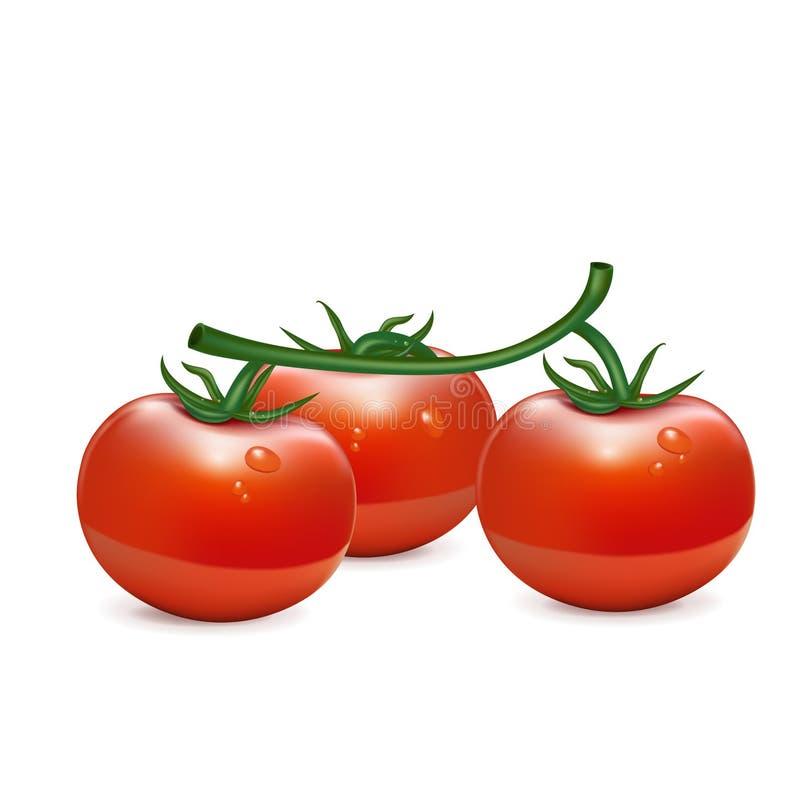 Groupe de trois tomates d'isolement illustration stock