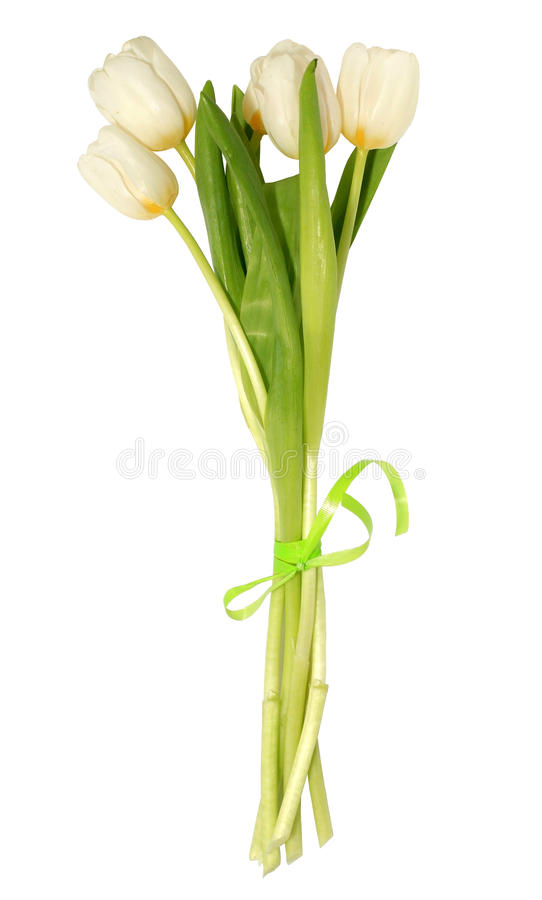 Groupe de tulipes blanches photo stock