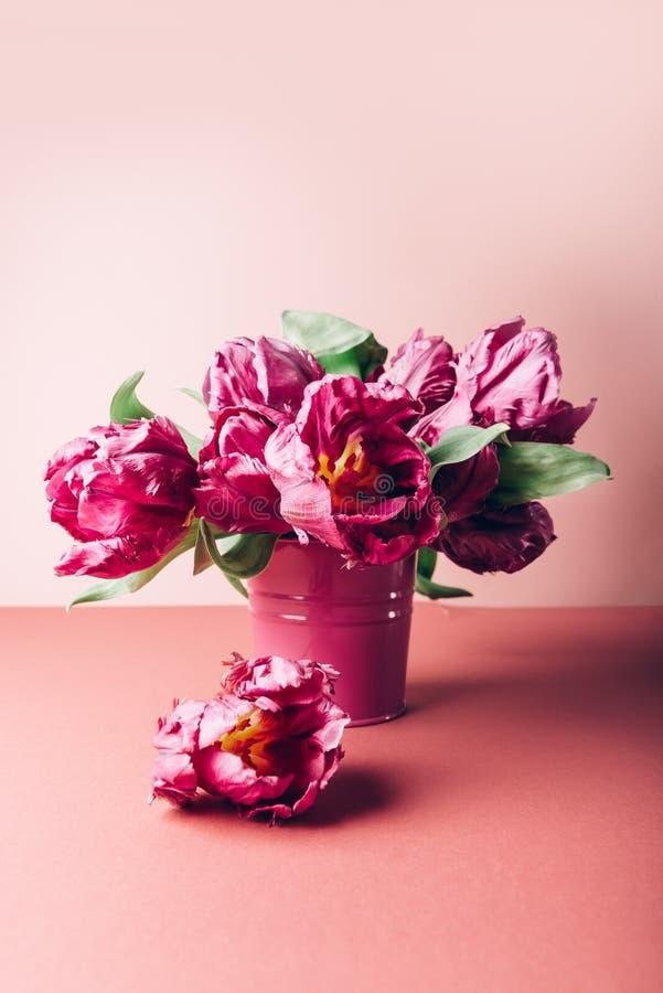 Groupe de tulipes de style Peony photos stock
