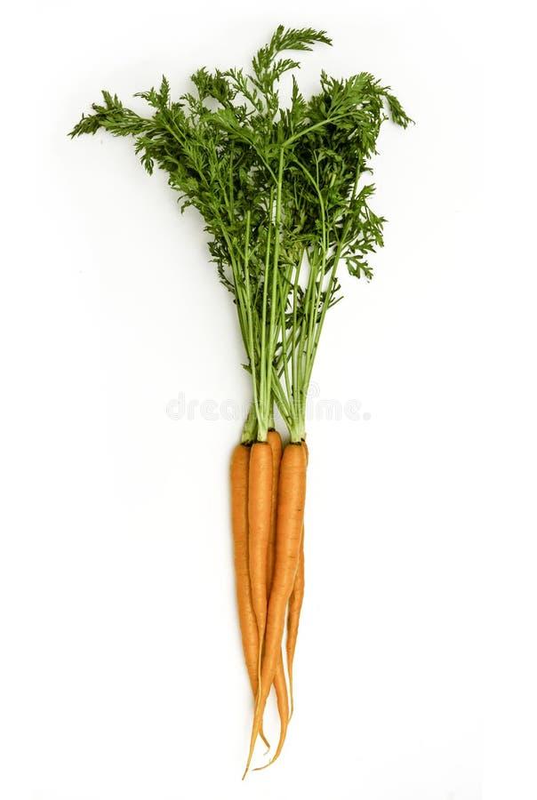 Groupe de vue d'isolement par carottes d'en haut photographie stock