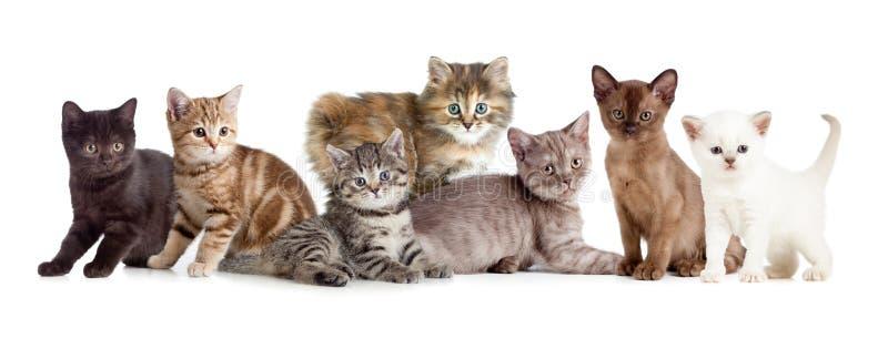 Groupe différent de chaton ou de chats image stock