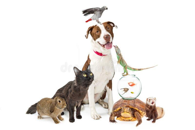 Groupe domestique d'animaux familiers ainsi que l'espace de copie image libre de droits