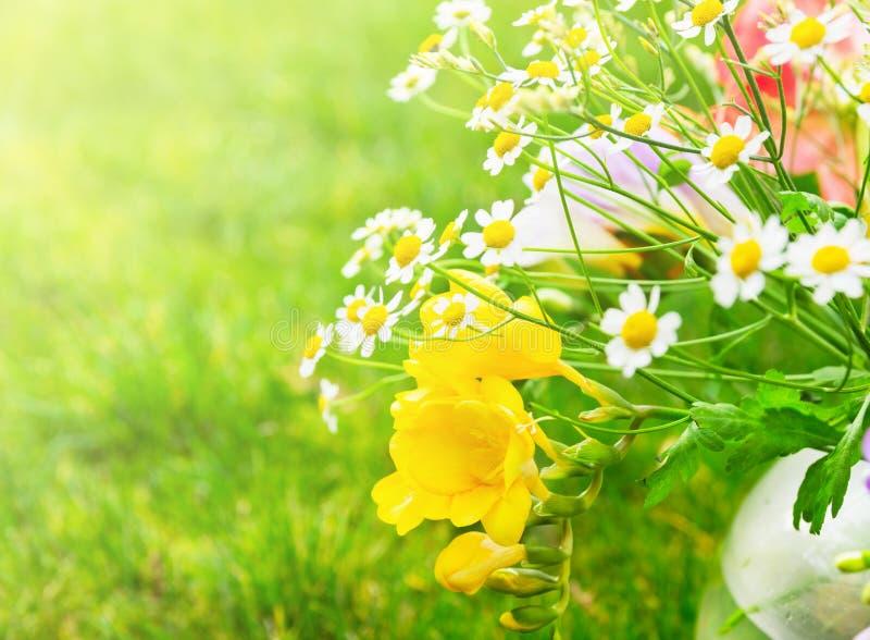 Groupe ensoleillé avec les fleurs jaunes de freesias photos libres de droits