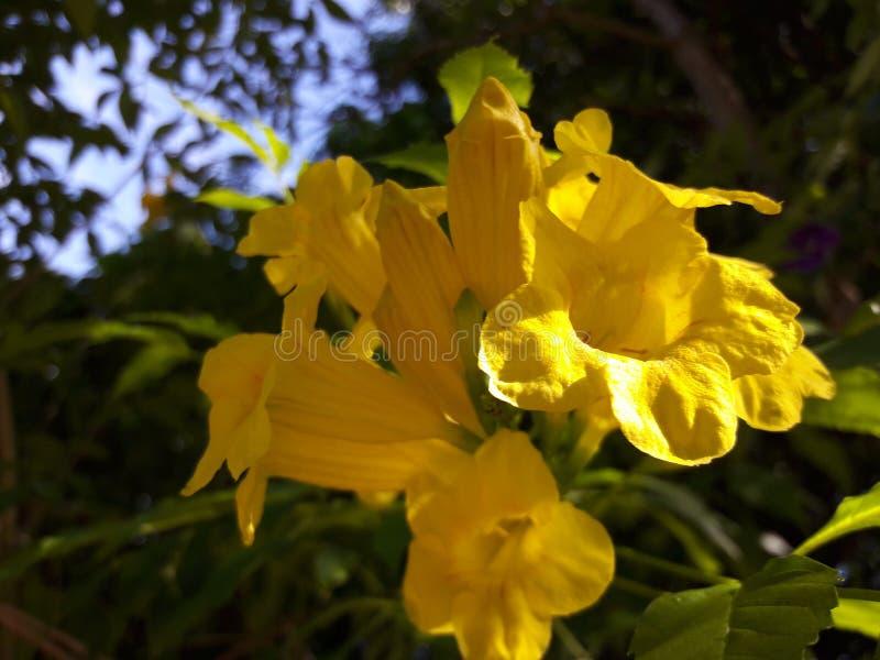 Groupe et feuilles de fleur de nature photos stock