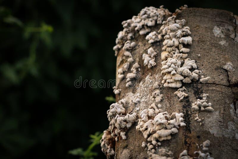 Groupe fongueux en bois photos stock
