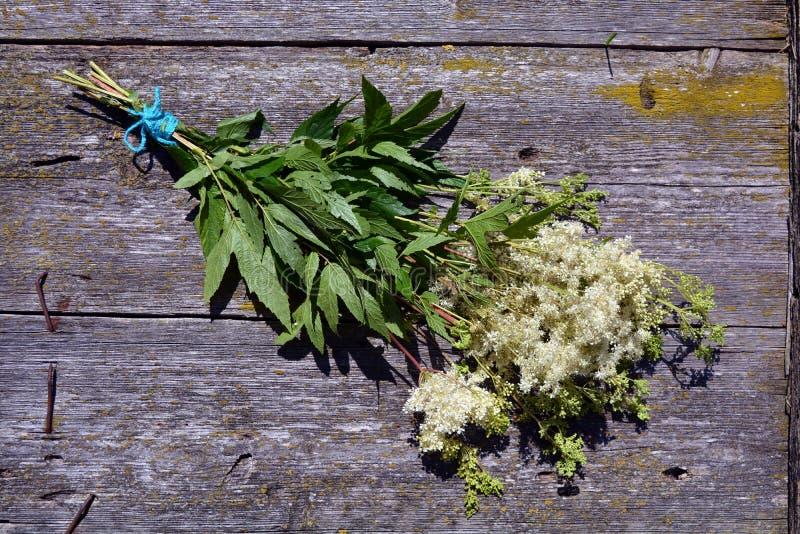 Groupe médical d'herbes de Meadowsweet sur le fond en bois image libre de droits