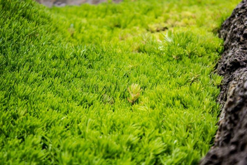 Groupe minuscule de plantes vertes images stock