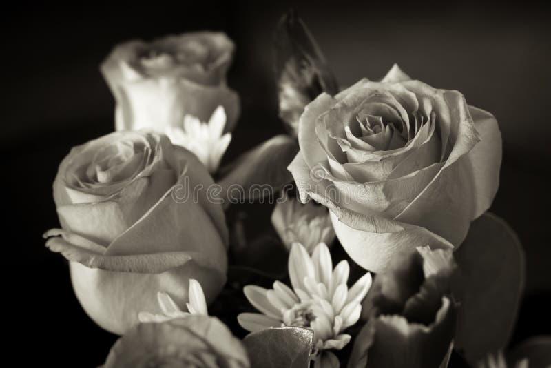 Groupe noir et blanc de rose photo libre de droits