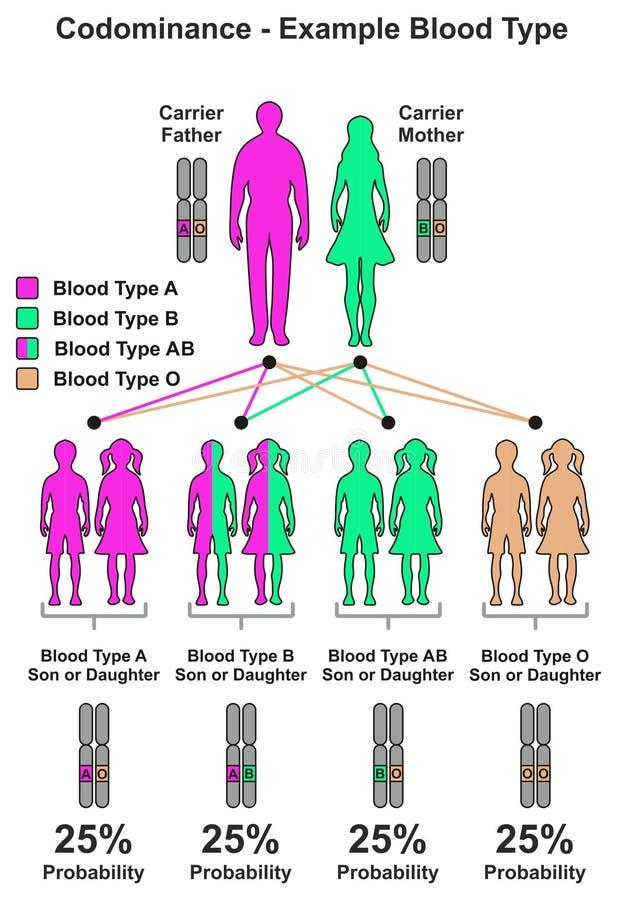 Groupe sanguin d'exemple de Codominance illustration stock