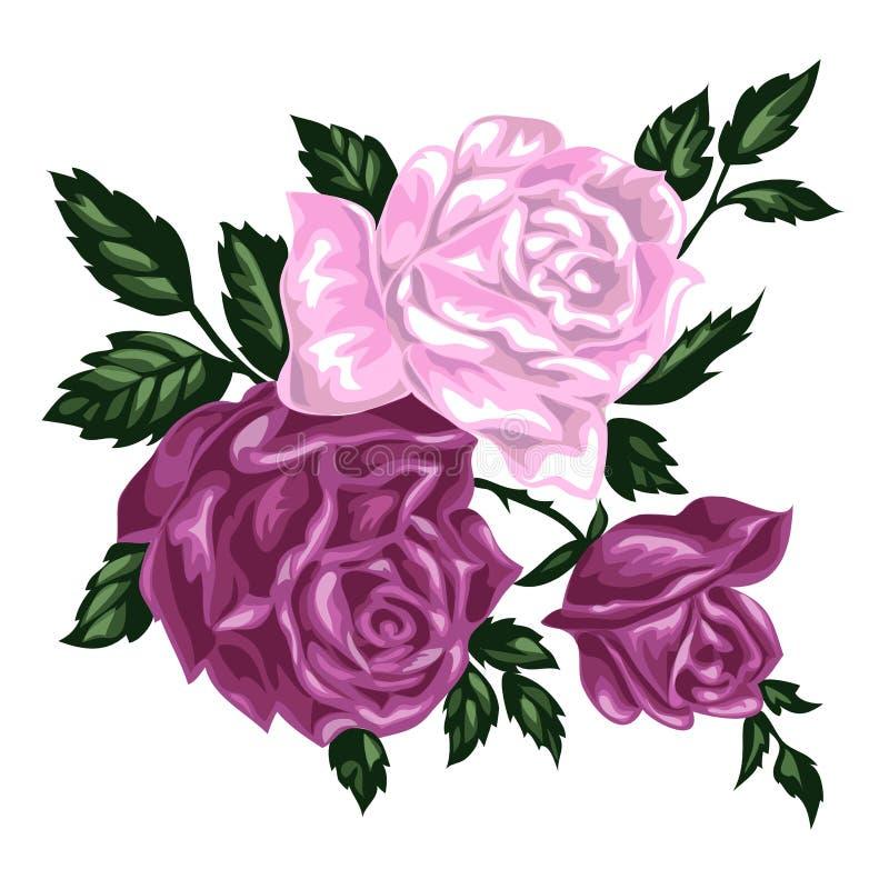 Groupe tiré par la main d'isolement de roses roses image stock