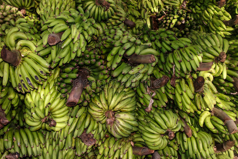 Download Groupe vert de banane image stock. Image du dieting, frais - 45353239