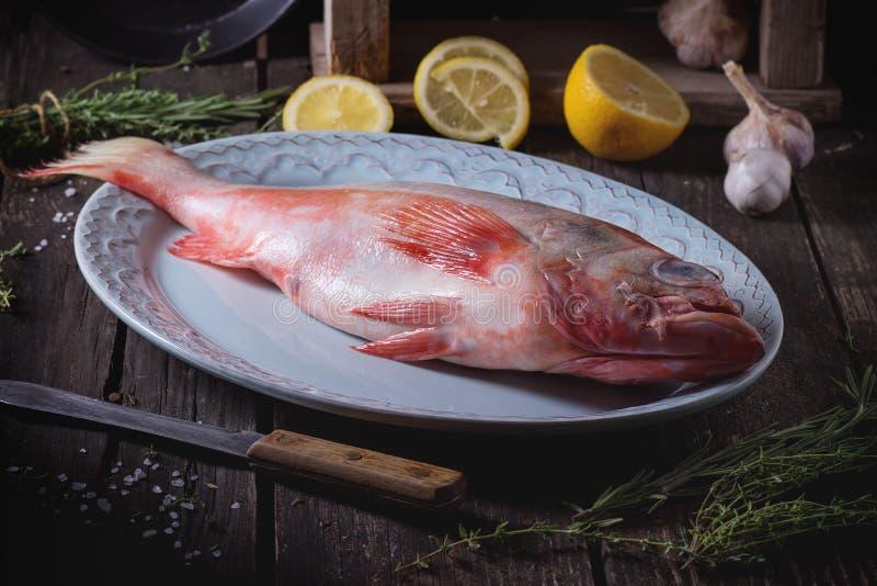 grouper ακατέργαστο στοκ εικόνες