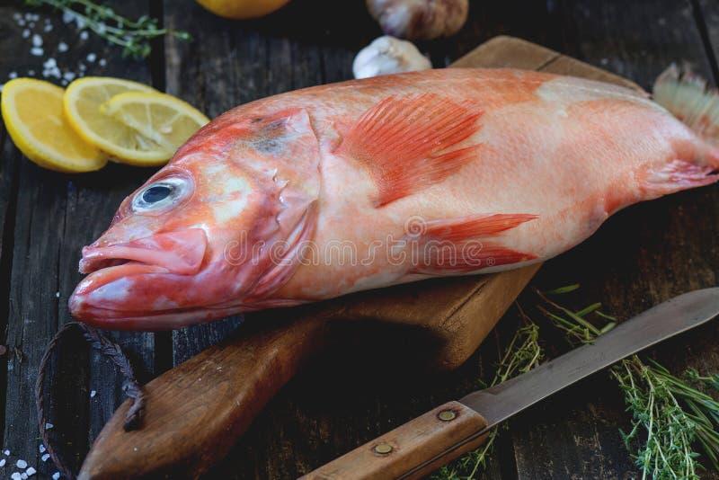 grouper ακατέργαστο στοκ εικόνα με δικαίωμα ελεύθερης χρήσης