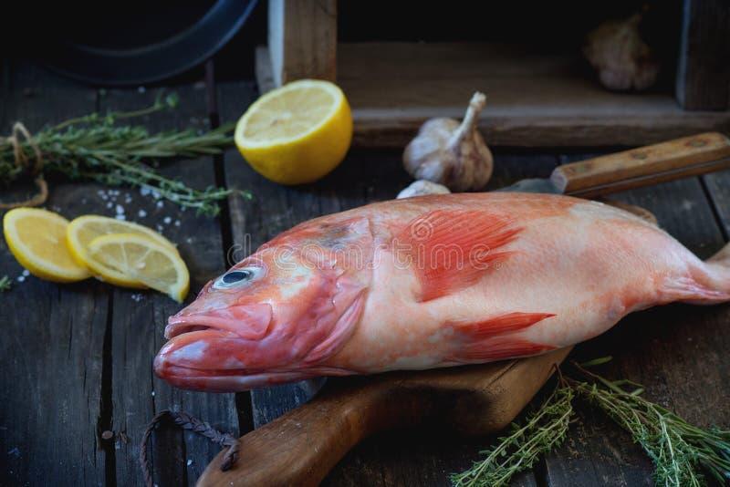 grouper ακατέργαστο στοκ φωτογραφία με δικαίωμα ελεύθερης χρήσης