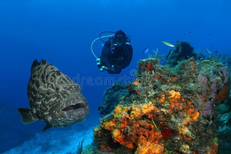 grouper δυτών τεράστιο σκάφανδρο στοκ εικόνες με δικαίωμα ελεύθερης χρήσης