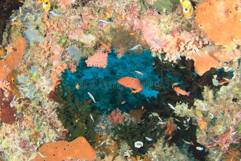 Grouper κοραλλιών ψαριών στοκ φωτογραφία με δικαίωμα ελεύθερης χρήσης