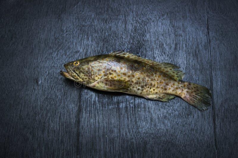 Grouper λεοπαρδάλεων ψάρια στοκ φωτογραφία