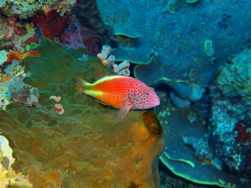 grouper στοκ φωτογραφίες με δικαίωμα ελεύθερης χρήσης