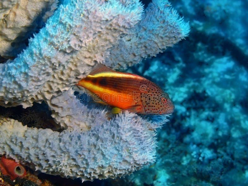 grouper στοκ φωτογραφία με δικαίωμα ελεύθερης χρήσης