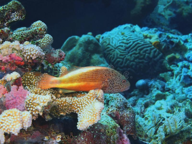 grouper στοκ εικόνα με δικαίωμα ελεύθερης χρήσης
