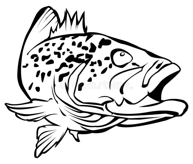 grouper бесплатная иллюстрация