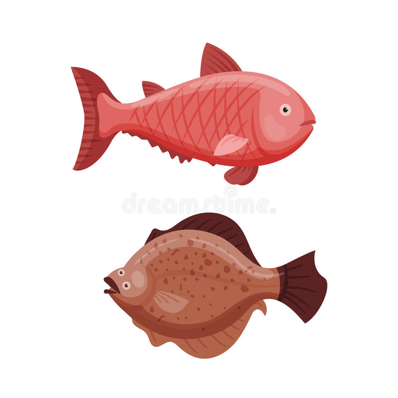 Grouper and cod fish vector illustration. Seafood animal aquatic restaurant biology scuba. Fresh marine nature reef fishing tail fin. Tropical wildlife scale royalty free illustration