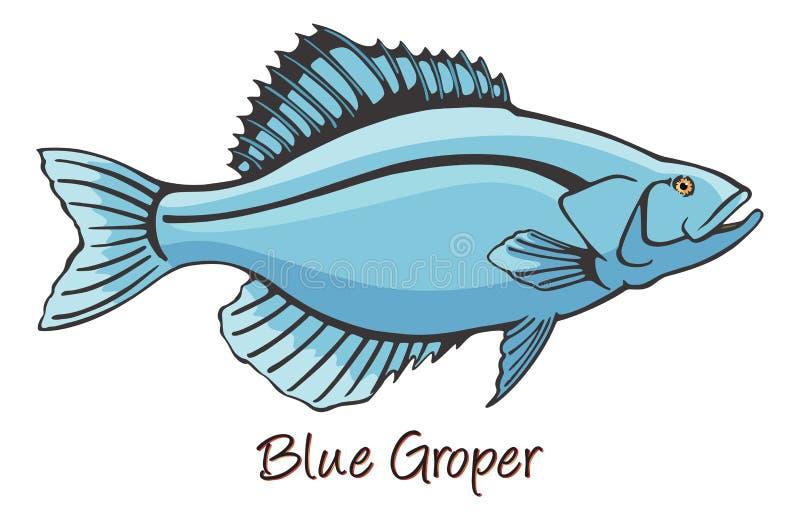 Grouper, Color Illustration. Grouper, a fish, Color Illustration royalty free illustration