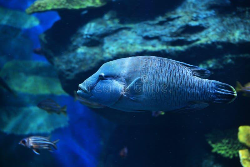 Grouper Fish stock photography