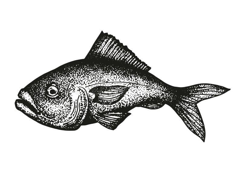 Grouper ryba nakreślenia wektor ilustracji
