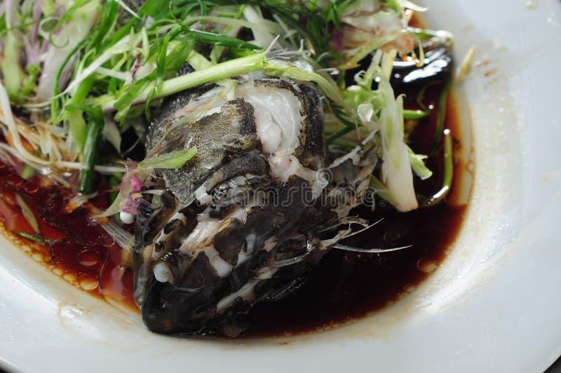 groupers στοκ φωτογραφίες