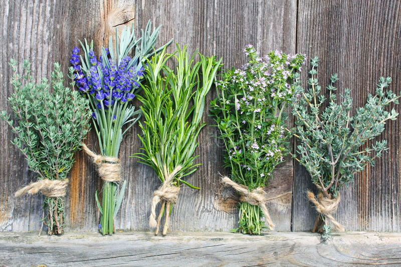 Groupes d'herbes image stock
