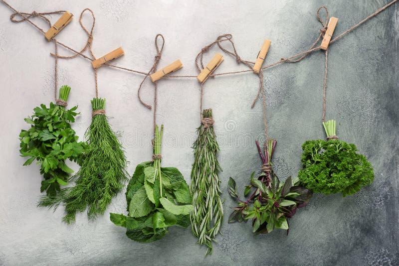 Groupes de différentes herbes fraîches sur le fond de couleur images libres de droits