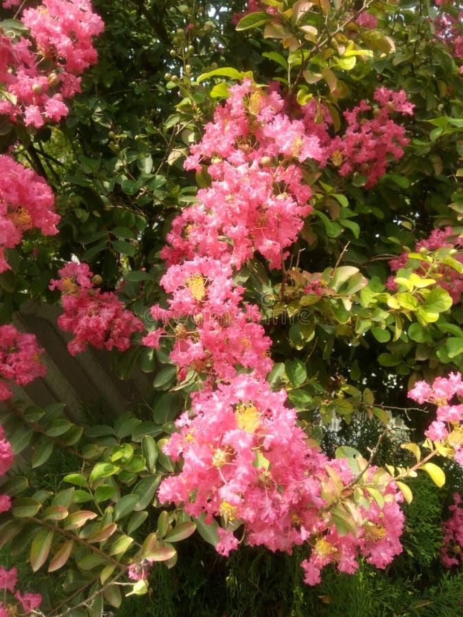 Groupes de fleurs roses images stock
