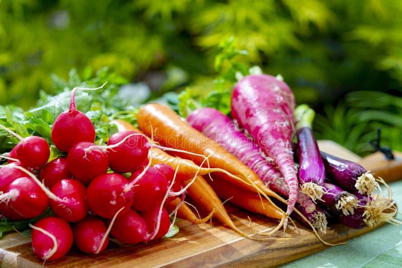 Groupes du petit et long radis rouge frais, des carottes et de l'oignon pourpre, nouvelle récolte des légumes sains images stock