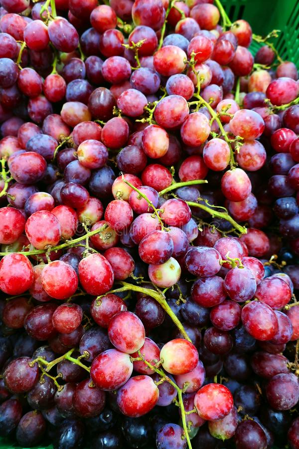 Groupes mûris de raisins noirs photographie stock libre de droits