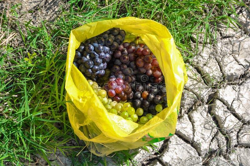 Groupes mûrs de raisins verts et noirs dans le sac photos libres de droits