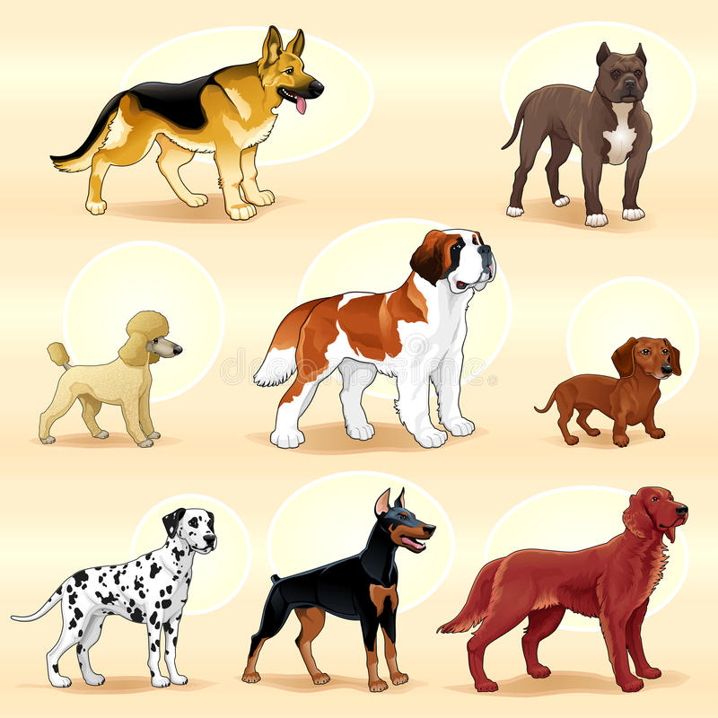 Download Groups of dog. stock vector. Illustration of happy, german - 34718115