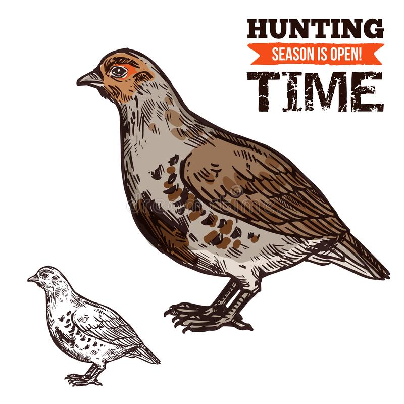 Grouse wild forest bird, hunting season prey. Hunting season, wild grouse in brown plumage. Bird or poultry prey, hunt time, hunters club. Vector fat animal with royalty free illustration