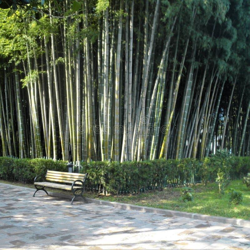 grove bambusowego wysoki jpg rezolucji obrazy royalty free