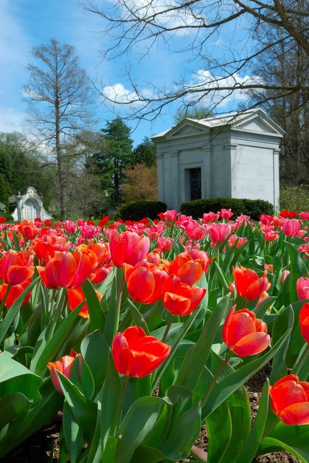 grove cmentarniana wiosny zdjęcie royalty free