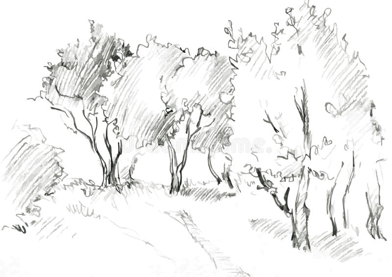 Grove of deciduous trees. Painted graphite pencil at the white background, hand drawn sketch of landscape, vector illustration stock illustration