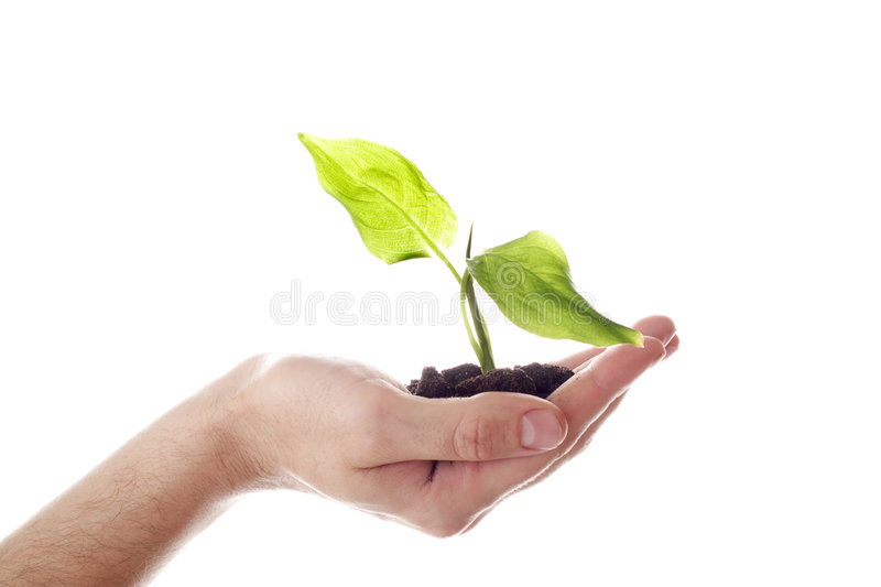 Grow. Floral background: a theme of growth royalty free stock photo