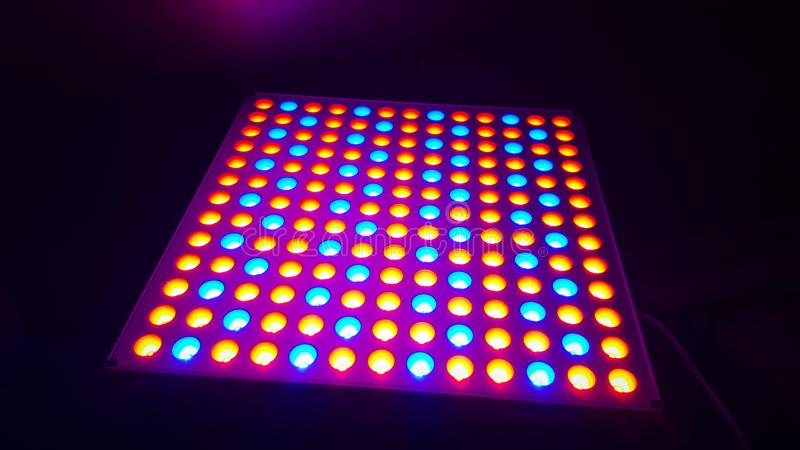 Grow lights. Blue and red grow lights planting indoors hydroponic stock photos