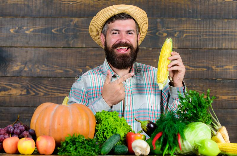 Grow organic crops. Man cheerful bearded farmer hold corncob or maize wooden background. Farmer straw hat presenting. Fresh vegetables. Farmer with homegrown stock photos