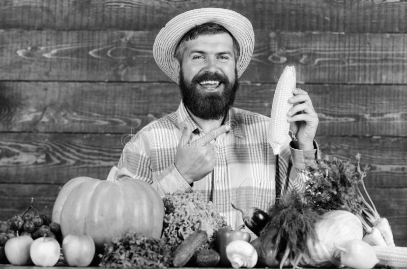 Grow organic crops. Man cheerful bearded farmer hold corncob or maize wooden background. Farmer straw hat presenting. Fresh vegetables. Farmer with homegrown stock photography