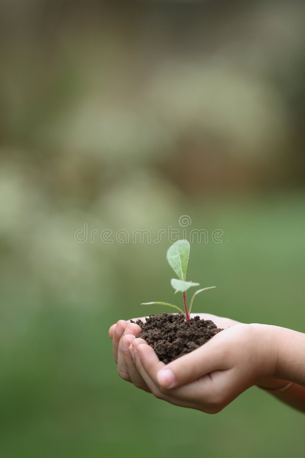 Download Grow plants stock photo. Image of green, growth, globes - 4634240
