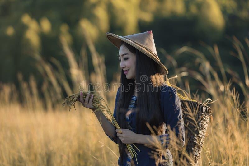 Grow rice stock photos