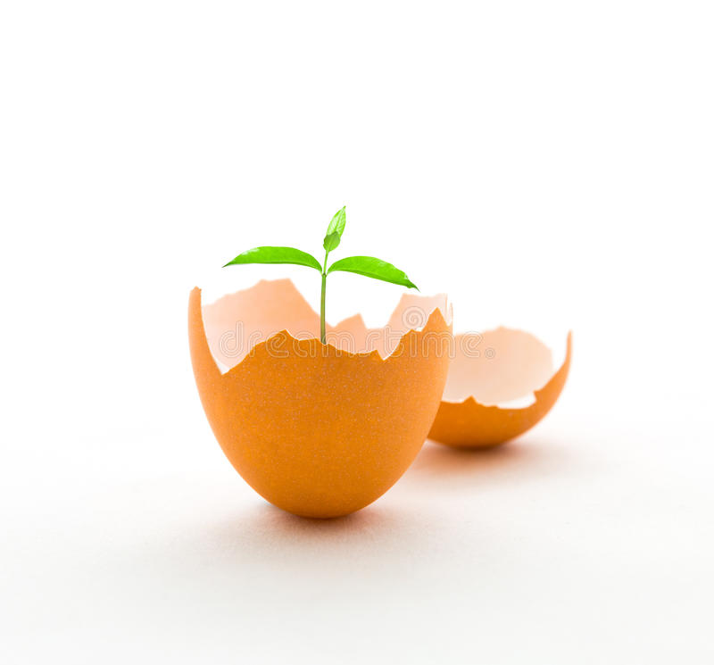 Grow a tree in eggshell, growth concept royalty free stock images