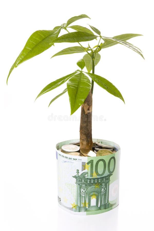 Download Grow up stock image. Image of flowerpot, development - 12990309