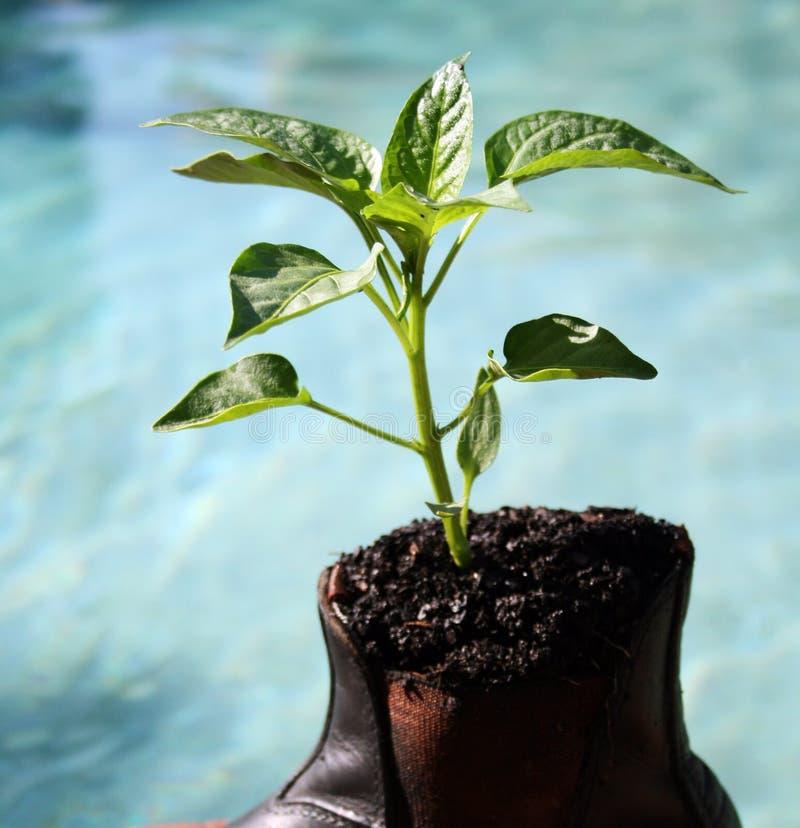 Grow your business stock photos
